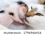 Mother Cat And Baby Cat