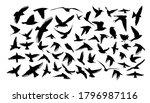 a set of different birds.... | Shutterstock .eps vector #1796987116