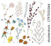 big set botanic blossom floral...   Shutterstock .eps vector #1797031066