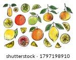 citrus. black line drawn on a... | Shutterstock .eps vector #1797198910