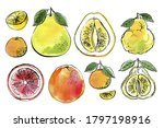 Citrus. Black Line Drawn On A...