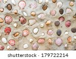 Shell Wall  Background Texture