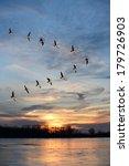 Flock Of Geese Flying In V...