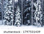 Beautiful And White Estonian...