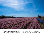 Pink And Blue Flowers Farm Wit...