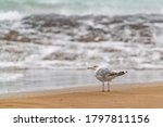 Large Seagull On The Seashore