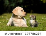 Stock photo dog and cat 179786294