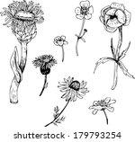 set of line drawing flowers ... | Shutterstock .eps vector #179793254