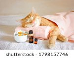 Sleeping Cat On A Massage Towel....