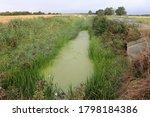 Green Marsh In Countryside....