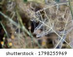Dried Plant Wrapped With Spider ...