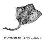 stingray. ink sketch of seafood.... | Shutterstock .eps vector #1798260373