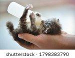 Man Feeding Newborn Ill Kitten...