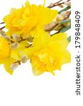 Bouquet Of Daffodils With...