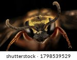 Long horned bee isolated on...