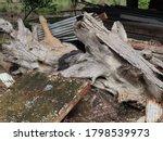 Old Brown Tree Stump Pile On...
