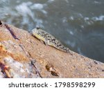 Mudskipper Live Life Naturally...