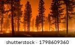 Wildfire burns ground in forest