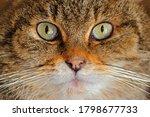 Detail eye portrait of cute cat....