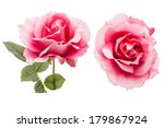 pink rose  isolated on white... | Shutterstock . vector #179867924
