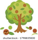 The Chestnut Tree Which...