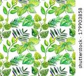 watercolor green leaves... | Shutterstock . vector #179903858