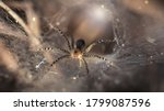 Small photo of macro photo of a small spider protecting its hole. slim and gracious arachnid but dreadful predator for insects trapped on its spider web, ruthless trap, somewhere in the tropical jungle of Thailand