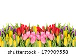 Tulips. Spring Flowers With...