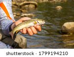 Fishing For Trout In A Mountai...