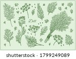 Set With Dill Branch  Leaf And...