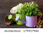 Spring flowers in watering can and gardening tools on wooden board. - stock photo