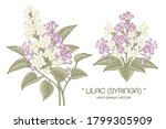 sketch floral decorative set.... | Shutterstock .eps vector #1799305909