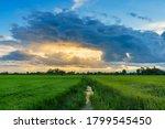 Beautiful Green Field Cornfiel...