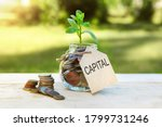 Capital. Glass jar with coins and a plant in it, with a label on the jar and a few coins on a wooden table, natural background. Finance and investment concept. High quality photo