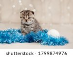 A Small Tabby Kitten With Blue...