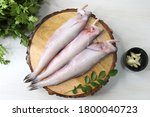 Fresh sea fish Bombay duck or Bombil and ingredients for cooking, green coriander, curry leaves and garlic. White background top view. Copy space
