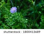 Pretty Purple Flower At The En...