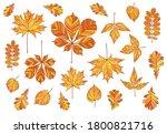 big set of autumn leaves. maple ... | Shutterstock .eps vector #1800821716