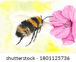 Watercolor Picture Of A Honey...