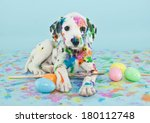Stock photo a funny little dalmatian puppy that looks like he just painted some easter eggs 180112748