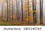 Autumn Misty Woodland....