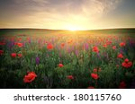 field with grass  violet... | Shutterstock . vector #180115760