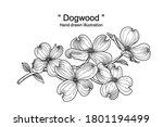 sketch floral decorative set.... | Shutterstock .eps vector #1801194499