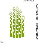 asparagus plant. isolated... | Shutterstock .eps vector #1801283899