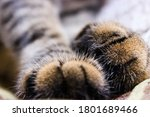 Close Up Shot Of A Cat's Paws....