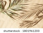 Blured Natural Palm Leaves...