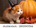 Ginger Kitten And Halloween...