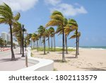 Strong Winds Sway Palm Trees O...