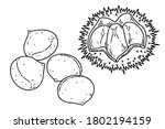 Chestnuts And Chestnut Bur....
