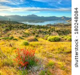 Blooming Sonoran Desert  With...